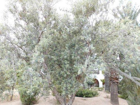 Marhaba Royal Salem: yard