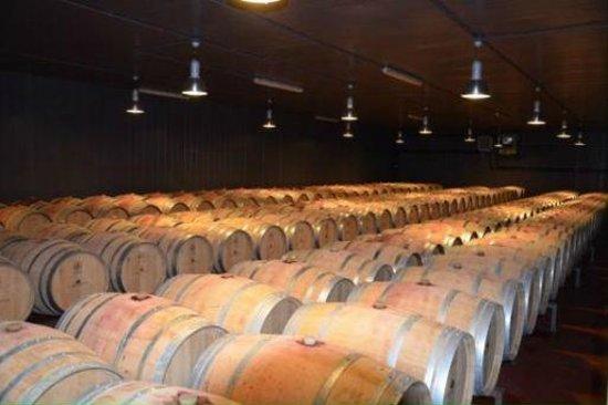 Ulignano, Italia: Tuscan wine tasting in tuscany winery