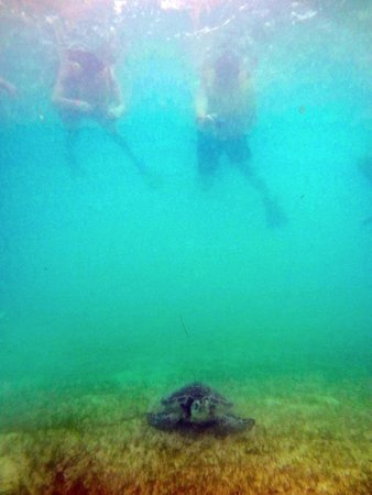 Grand Bahia Principe Coba: Turtle snorkelling at Akumal