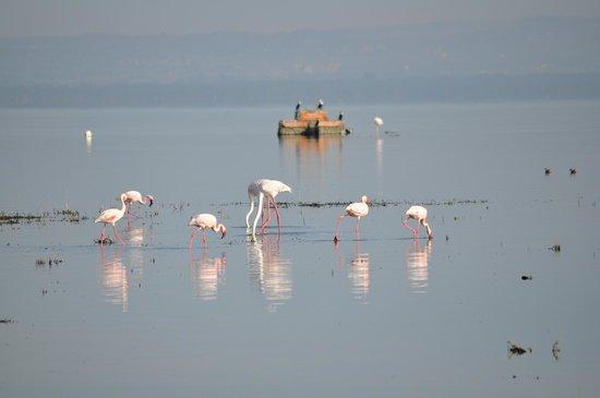 Kenya Incentive Tours & Safaris - Day Tours: Morning Flamingos