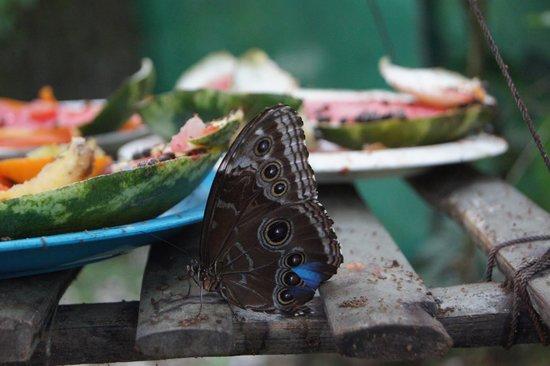 Blue River Resort & Hot Springs : Beautiful butterflies!