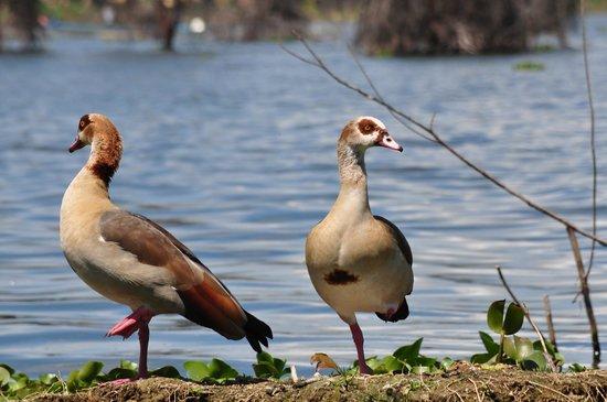 Kenya Incentive Tours & Safaris - Day Tours: On the lake....