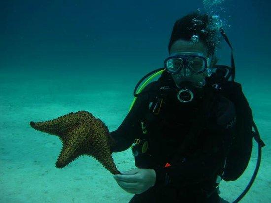 Diving Dominican Republic : Beautiful seastar