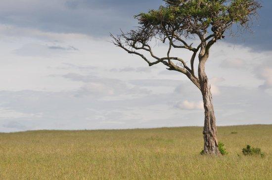 Kenya Incentive Tours & Safaris - Day Tours: Had to take this shot of a lone tree