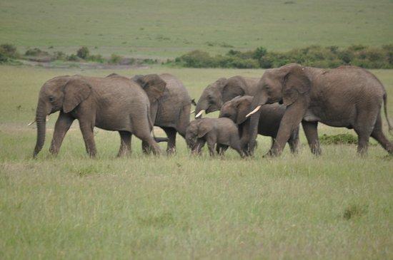 Kenya Incentive Tours & Safaris - Day Tours: Herds