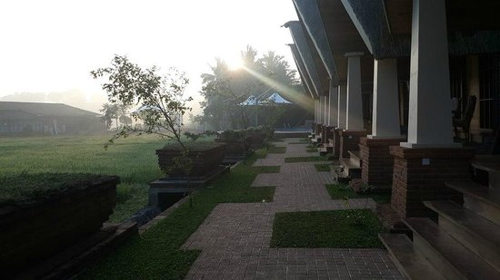 Avasta Resort & Spa : nice walk in paddy
