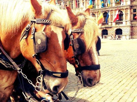 Grote Markt van Antwerpen: Horses at Grote markt