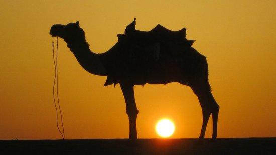 Hotel Rawalkot Jaisalmer: A découvrir pas loin...