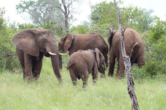 Siyafunda Conservation: Family of elephants