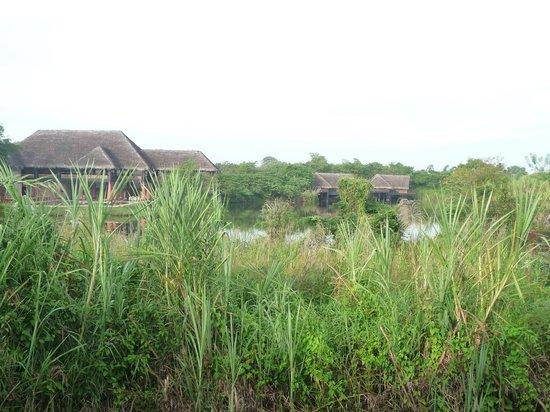 Jetwing Vil Uyana: grüne Umgebung