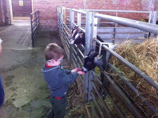Playdale Farm Park : Feeding the goats
