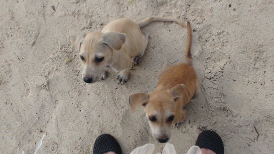 Grandvrio Resort Saipan : ホテルの目の前のビーチにいるとっても可愛い子犬ちゃん