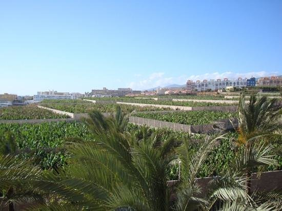 ClubHotel Riu Buena Vista : View from our balcony (banana trees)