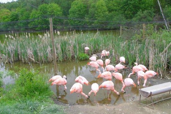 Stare Zoo Poznan : Flamingo