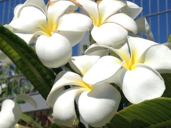 Miami Beach Botanical Garden : Wow!