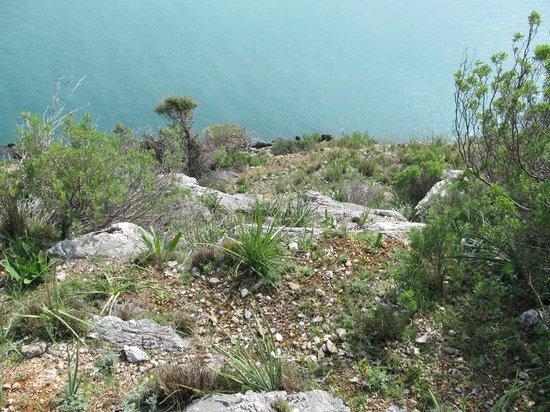 Alanya Kalesi (Castle): Склоны все круче