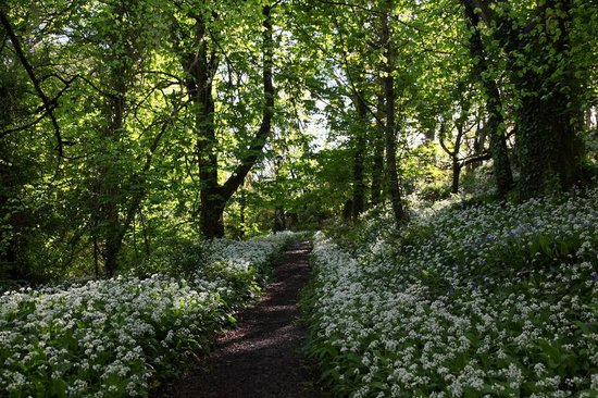 Lydstep Beach Holiday Park - Haven: walking through the park