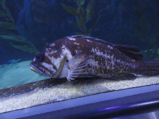 Aquarium of the Bay: second fish for dinner