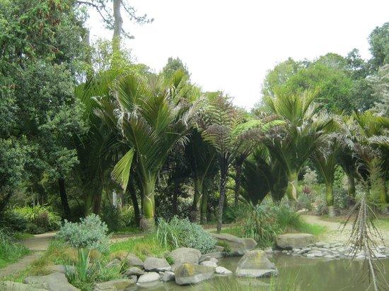 San Francisco Botanical Garden: garden