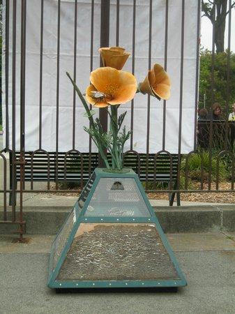 San Francisco Botanical Garden: pls donate to the garden for future generations