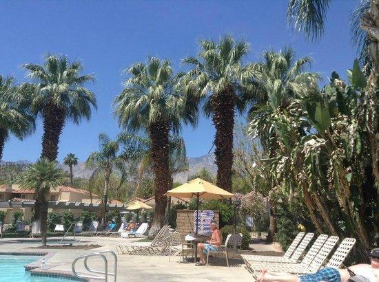 Oasis Villa Resort : Main pool area