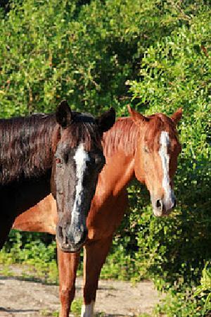 Rancho Universo Heal a Horse Cozumel Horse Sanctuary Non-Profit Organization