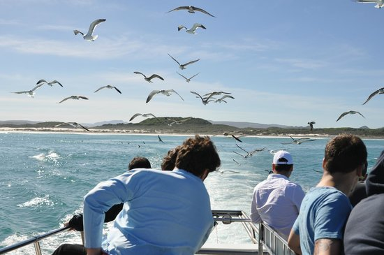 Great White Shark Tours: Birds smell the chum