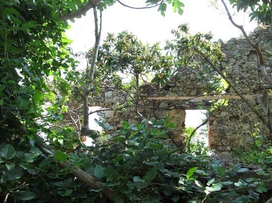Alanya Kalesi (Castle): Заброшенный сад