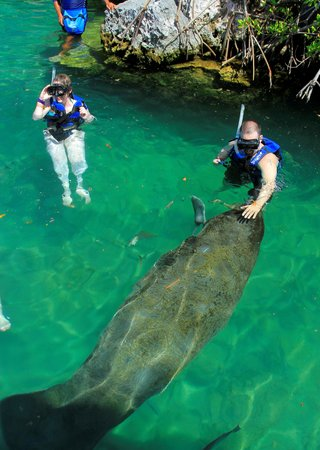 Xel-Ha: Swimming with the Manatees