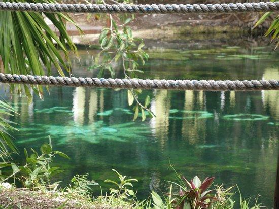 Sandos Caracol Eco Resort: Before the cenote