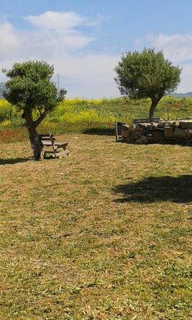 Conjunto Arqueológico Baelo Claudia: A shady seat - when the sun is in the right direction!