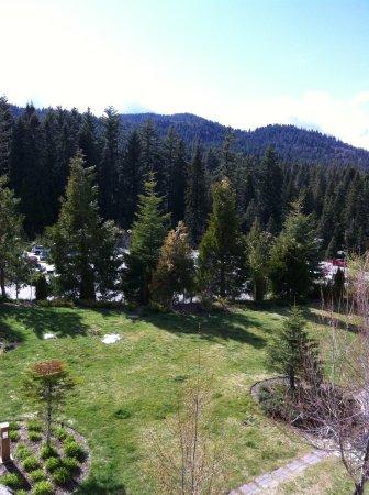 Tenaya Lodge at Yosemite : Room with a view