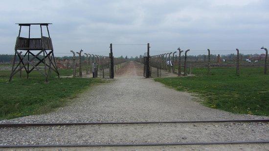 Krakow Tours: Birkenau