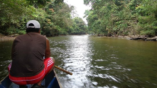 Mulu Caves : The Mulu River