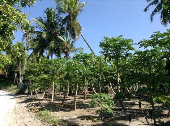 Vacation Home : плантации