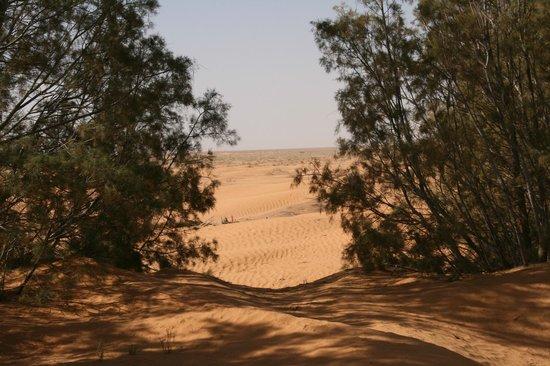 Campement El biben: Vue sur le désert