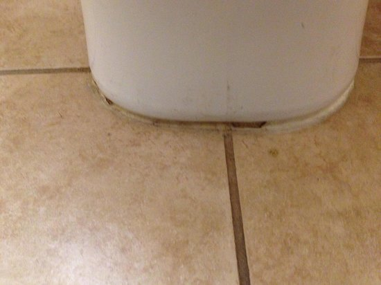 Cadet Motor Inn: Old toilet filth