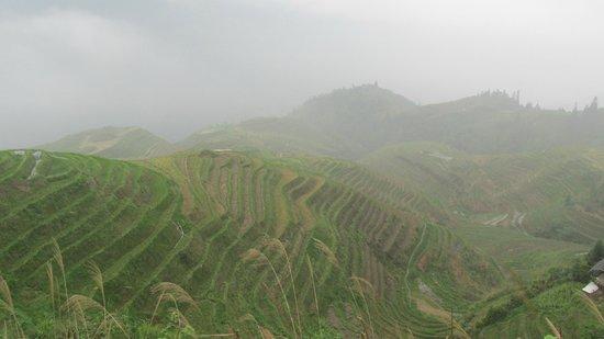 Dragon's Backbone Rice Terraces : Beautiful views in April.