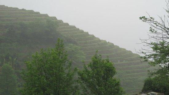 Dragon's Backbone Rice Terraces : Dragon's backbone...what's in a name?