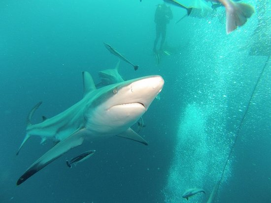 Aqua Planet Dive Center and Charter: Sharks' experience