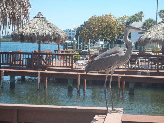 Plaza Beach Hotel - Beachfront Resort : Bay view property