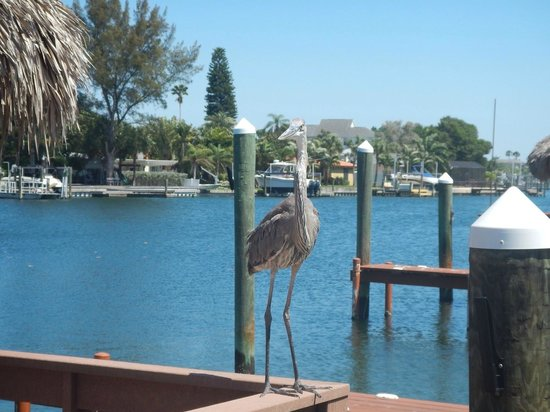 Plaza Beach Hotel - Beachfront Resort: Great Blue heron hanging out at the Bay property