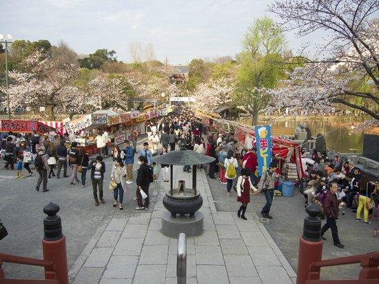 Ueno Park: Начало апреля. Ханами