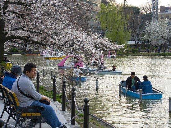 Ueno Park: .