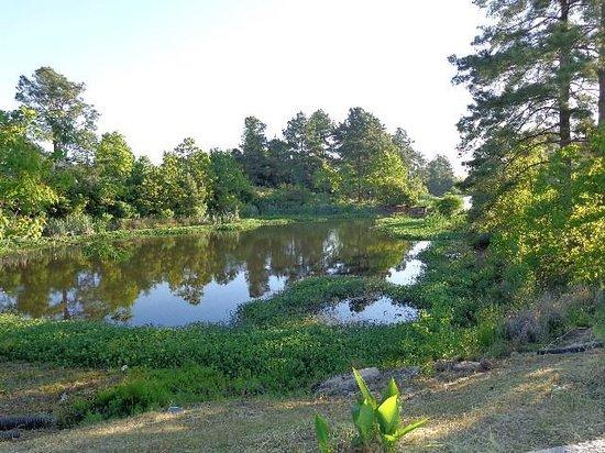 Pavillion RV Park: Fishing Pond
