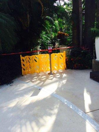 The Grand Mayan Riviera Maya: Area en remodelacion te das cuenta hasta que llegas