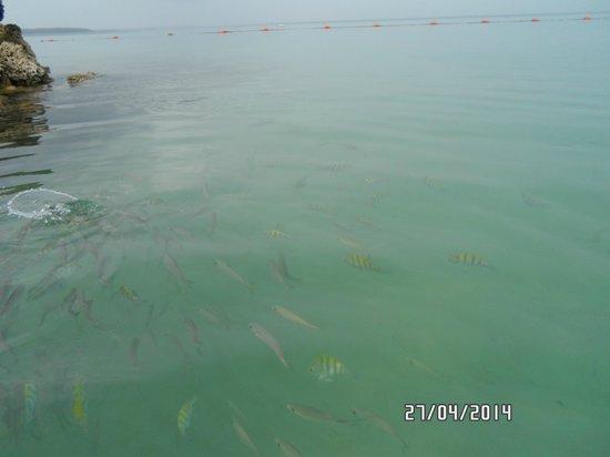 Decameron Barú: los peces tropicales en el mar de Barú
