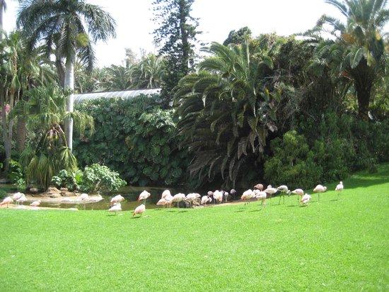 Loro Parque : фламинго