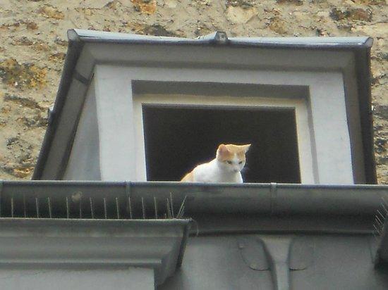 Hotel du Continent : gatto dei tetti parigino