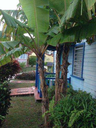 Hotel Bambou : Vue depuis notre terrasse le lendemain de l'arrivée à 6h du mat